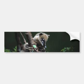 小さい与太者のcoati - lemur バンパーステッカー