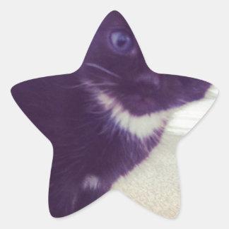 小さい子猫 星シール