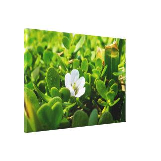 小さい白い花 キャンバスプリント
