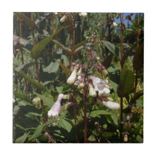 小さい白い花 タイル