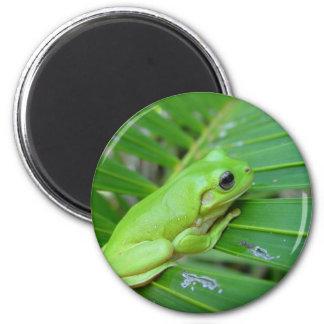 小さい緑カエル マグネット