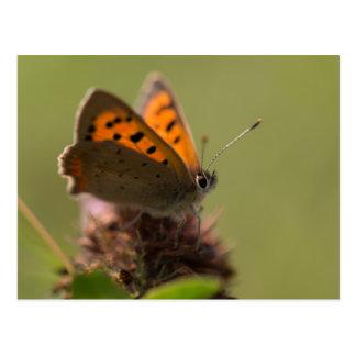 小さい銅の蝶 ポストカード