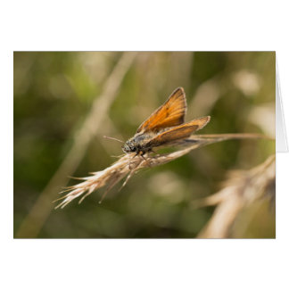 小さい飛ぶ人の蝶 カード