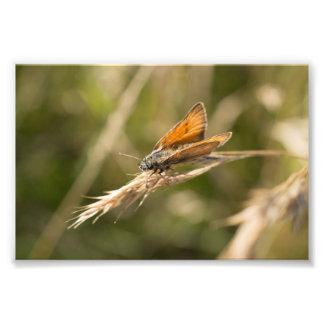 小さい飛ぶ人の蝶 フォトプリント