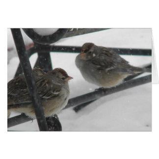 小さい鳥 カード