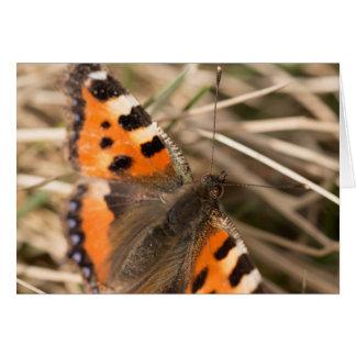 小さいTortoiseshell蝶 カード