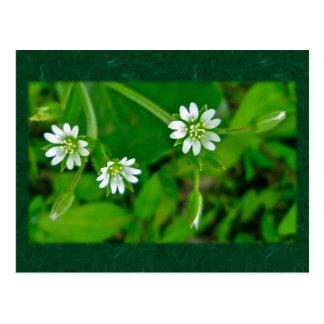 小さく白い野生の花の調整項目 ポストカード