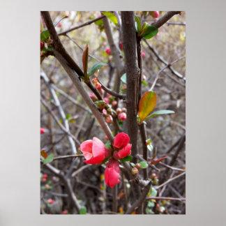 小さく赤い花 ポスター