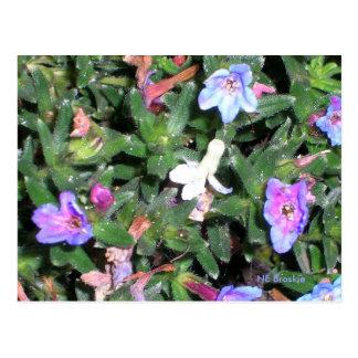 小さく青い花 ポストカード