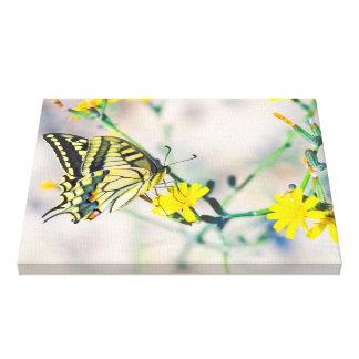 小さく黄色い花および美しい蝶 キャンバスプリント