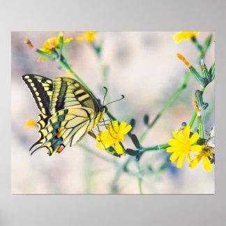 小さく黄色い花および美しい蝶 ポスター