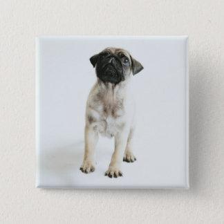 小さく、かわいいパグの子犬 5.1CM 正方形バッジ