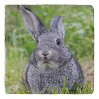 小型バニーウサギ トリベット