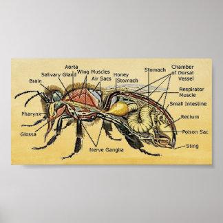 小型蜂蜜の蜂ポスター ポスター