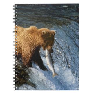 小川のアラスカのヒグマの伝染性のサケ ノートブック