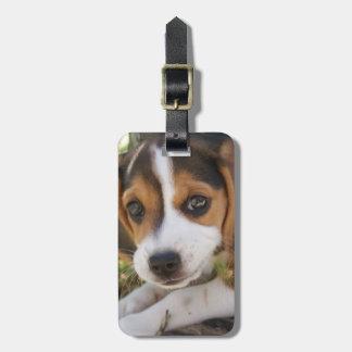 小犬のビーグル犬 ラゲッジタグ