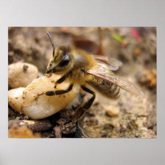 小石を持つ蜂 ポスター