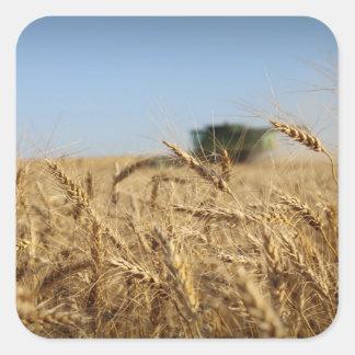 小麦畑のコンバイン スクエアシール