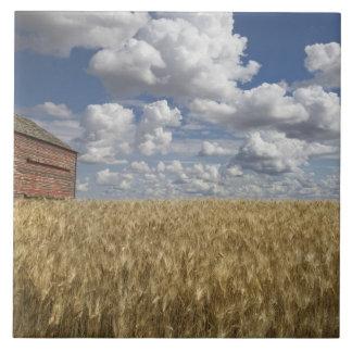 小麦畑2の古い納屋 タイル