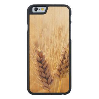 小麦畑 ケース
