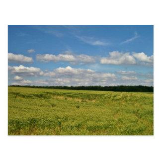 小麦畑 ポストカード