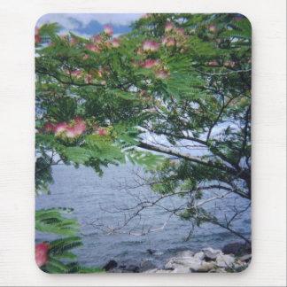 少し湾公園の花盛りのmimosaの木 マウスパッド