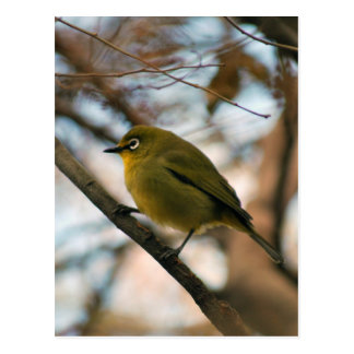 少し白い目の鳥とまられる ポストカード
