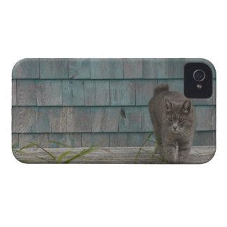 尾無しの猫 Case-Mate iPhone 4 ケース