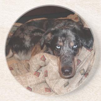 居眠りしているCatahoulaのヒョウ犬 コースター