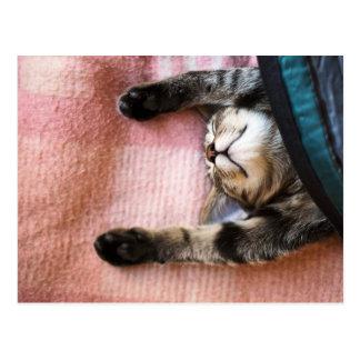 居眠りの子ネコ ポストカード