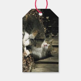 居眠りの虎猫猫のギフトのラベル ギフトタグ