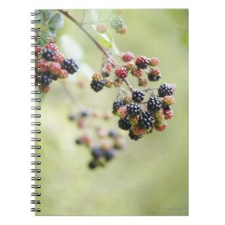 屋外に育つブラックベリー ノートブック