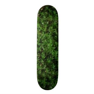 屋外の植物の緑の地上のコケの自然の植物 スケボーデッキ