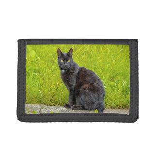屋外黒猫の着席