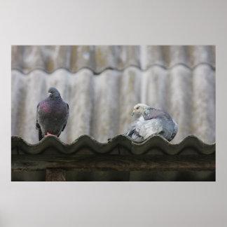 屋根のハト ポスター