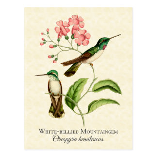 山の宝石のハチドリのヴィンテージの芸術 ポストカード