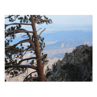山の郵便はがきの松の木 ポストカード
