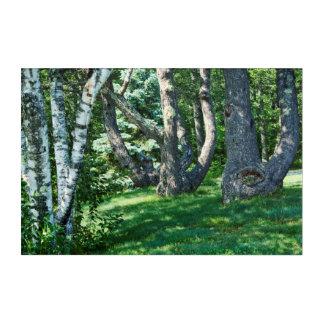 山腹の木 アクリルウォールアート