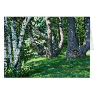 山腹の木 ノートカード