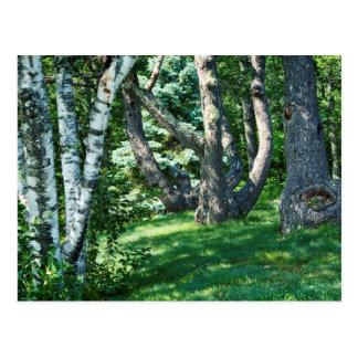 山腹の木 ポストカード