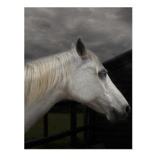 嵐の馬 ポストカード