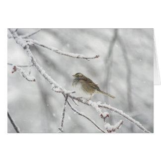 嵐(メッセージカード)の鳥 カード
