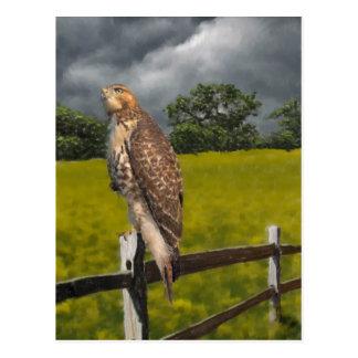 嵐-赤い尾タカ--を待っています ポストカード