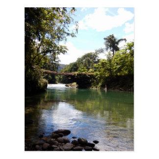 川および雨林 ポストカード