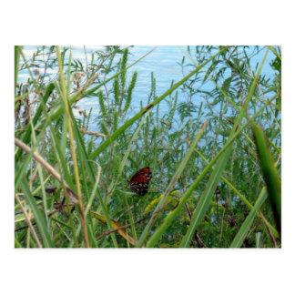 川による蝶 ポストカード