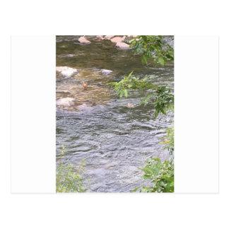 川のアヒル ポストカード
