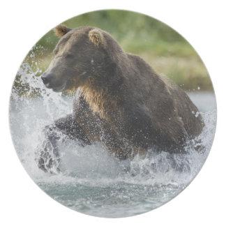 川のサケを追跡しているヒグマ プレート