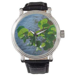 川上の海のブドウの葉はフロリダの自然を植えます 腕時計