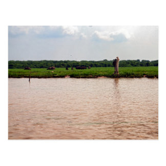 川岸の水牛および漁師、カンボジア ポストカード