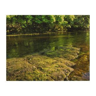 川Swale、Easby、リッチモンド、ノースヨークシャー州 ウッドウォールアート